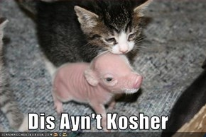 Dis Ayn't Kosher