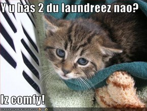 Y u has 2 du laundreez nao?  Iz comfy!