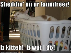 Sheddin' on ur laundreez!  Iz kitteh!  Iz wut I do!