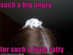 such a big angry   for such a little ratty