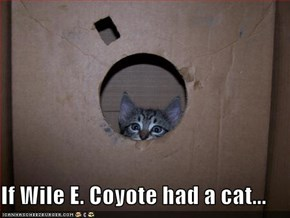 If Wile E. Coyote had a cat...