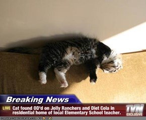 Breaking News - Cat found OD'd on Jolly Ranchers and Diet Cola in residential home of local Elementary School teacher.