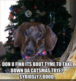 DON U FINK ITS BOUT TYME TO TAKE DOWN DA CATSMAS TRYE? SYRIOSLY? DOOD.