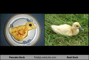 Pancake Duck Totally Looks Like Real Duck