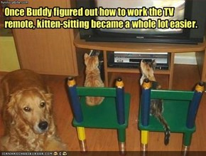 Once Buddy figured out how to work the TV remote, kitten-sitting became a whole lot easier.