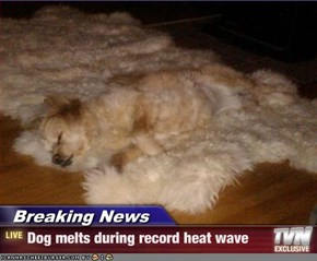 Breaking News - Dog melts during record heat wave