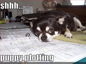 shhh...  puppy plotting