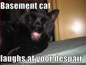 Basement cat  laughs at yoor despair