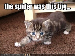 the spider was this big...