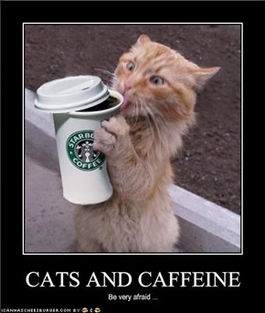 CATS AND CAFFEINE