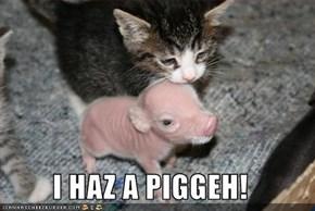 I HAZ A PIGGEH!