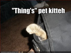 """Thing's"" pet kitteh"