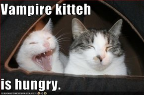 Vampire kitteh  is hungry.