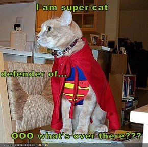 I am super-cat defender of... OOO what's over there???
