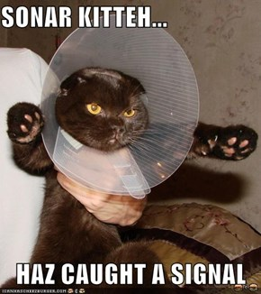SONAR KITTEH...  HAZ CAUGHT A SIGNAL
