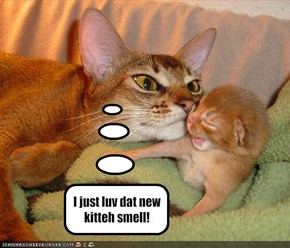I just luv dat new kitteh smell!
