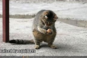 raised by squirrels