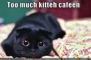 Too much kitteh cafeen