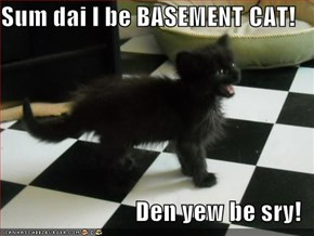 Sum dai I be BASEMENT CAT!  Den yew be sry!