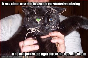 It was about now that basement cat started wondering