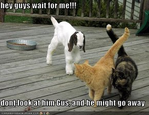 hey guys wait for me!!!  dont look at him Gus, and he might go away