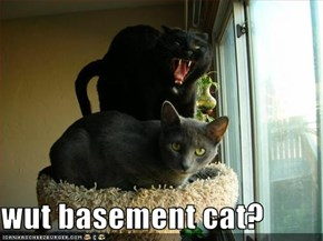 wut basement cat?