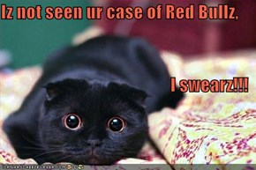Iz not seen ur case of Red Bullz, I swearz!!!