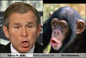 George W. Bush Totally Looks Like this Chimpanzee