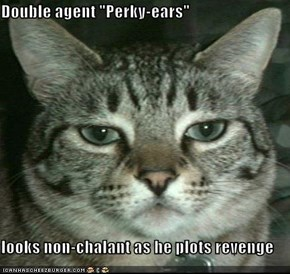 "Double agent ""Perky-ears""  looks non-chalant as he plots revenge"