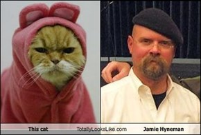 This cat Totally Looks Like Jamie Hyneman