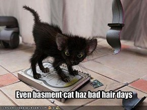 Even basment cat haz bad hair days