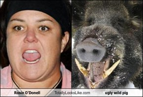 Rosie O'Donell Totally Looks Like ugly wild pig