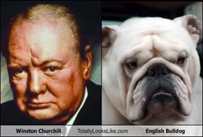 Winston Churchill Totally Looks Like English Bulldog