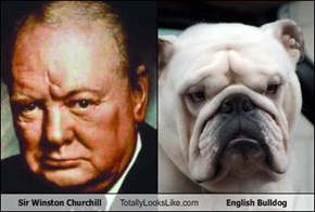 Sir Winston Churchill Totally Looks Like English Bulldog
