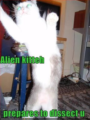 Alien kitteh prepares to dissect u