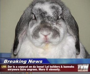 Breaking News - Der is a copycat on da loose! Lol builders & bunnehs evrywere have angrees. More @ eleventy.