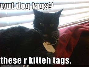 wut dog tags?  these r kitteh tags.