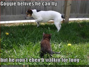 Goggie belives he can fly  but he won't eben b walkin for long