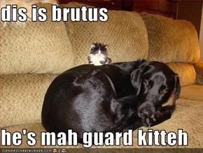 dis is brutus  he's mah guard kitteh