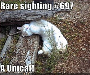 Rare sighting #697  A Unicat!