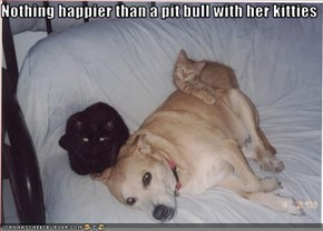 Nothing happier than a pit bull with her kitties