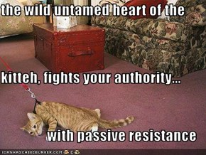 the wild untamed heart of the  kitteh, fights your authority...                 with passive resistance