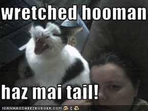 wretched hooman  haz mai tail!