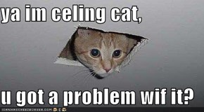ya im celing cat,  u got a problem wif it?