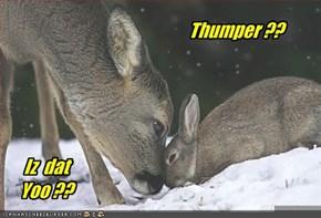 Thumper ??