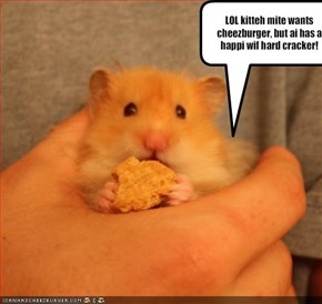 LOL kitteh mite wants cheezburger, but ai has a happi wif hard cracker!
