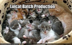 Lolcat Batch Production