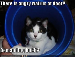 There is angry walrus at door?  Demanding bukit?