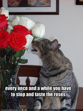 every once and a while you have to stop and taste the roses