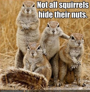 Not all squirrels